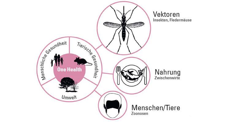 Verschiedene Übertragungswege von Infektionserregern und ihre Bedeutung. Stechmücken gelten im globalen Kontext als die wichtigsten Überträger von Infektionskrankheiten. An zweiter Stelle steht die Übertragung von Infektionserregern über die Nahrung (inkl. Wasser) und an dritter Stelle die Übertragung vom Tier auf den Menschen (sog. Zoonosen) oder von Mensch zu Mensch. Das Konzept »One Health« steht für einen umfassenden, interdisziplinären Ansatz, der die komplexen Zusammenhänge zwischen Mensch, Tier, Umwelt und Gesundheit beschreibt. Grafik: AG Klimpel
