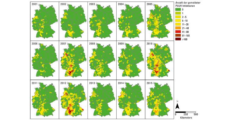 Das Puumala-Virus wird in Europa hauptsächlich durch die Rötelmaus übertragen. Die Größe und Dichte der Rötelmauspopulationen beeinflusst die Häufigkeit menschlicher Infektionen. Anzahl der gemeldeten humanen Hantavirus (Puumala Virus = PUUV)-Infektionen seit der Meldepflicht. Grafik: AG Klimpel